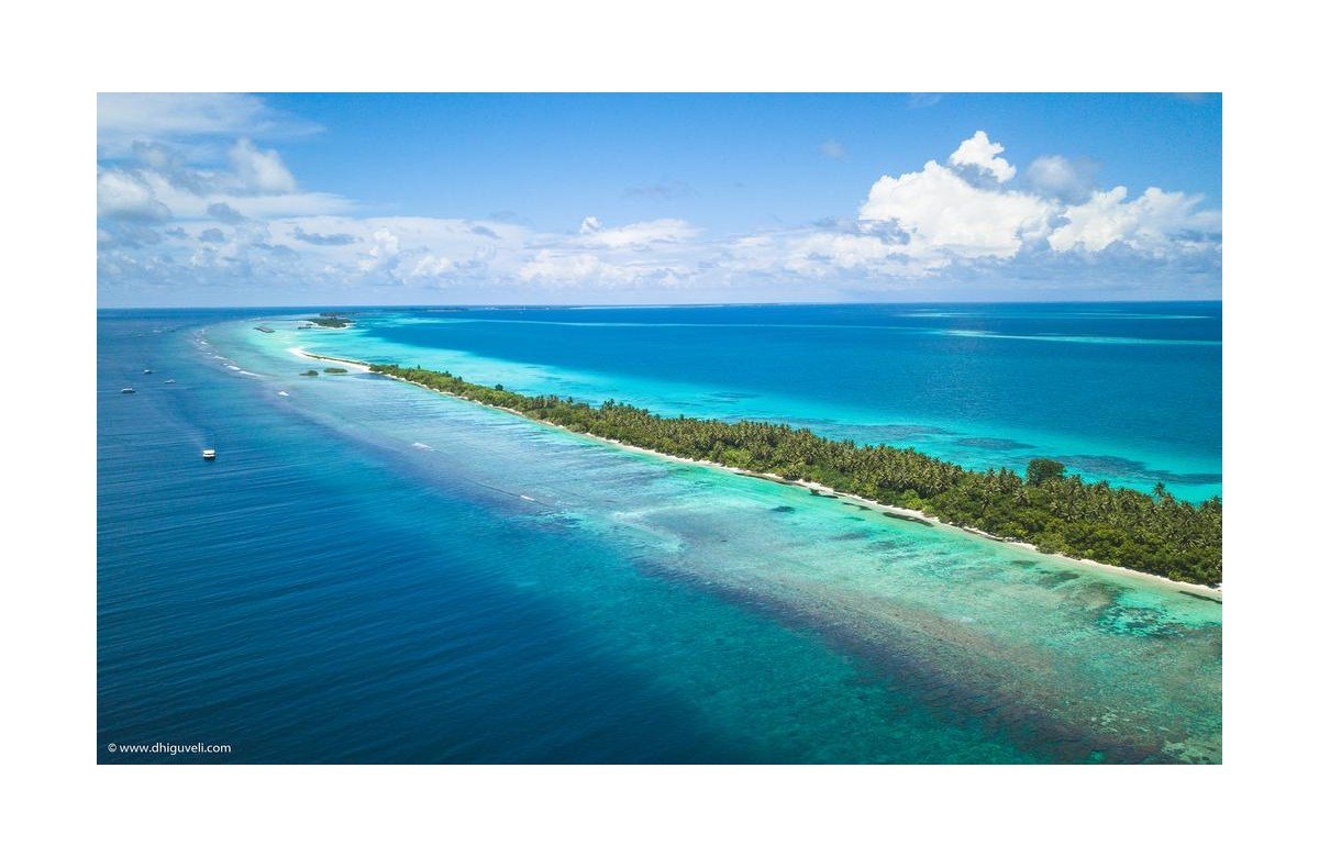 DHIGUVELI DIVE RESORT I 7 NIGHTS + 6 DIVING DAYS I ALIF DHAAL ATOLL I MALDIVES