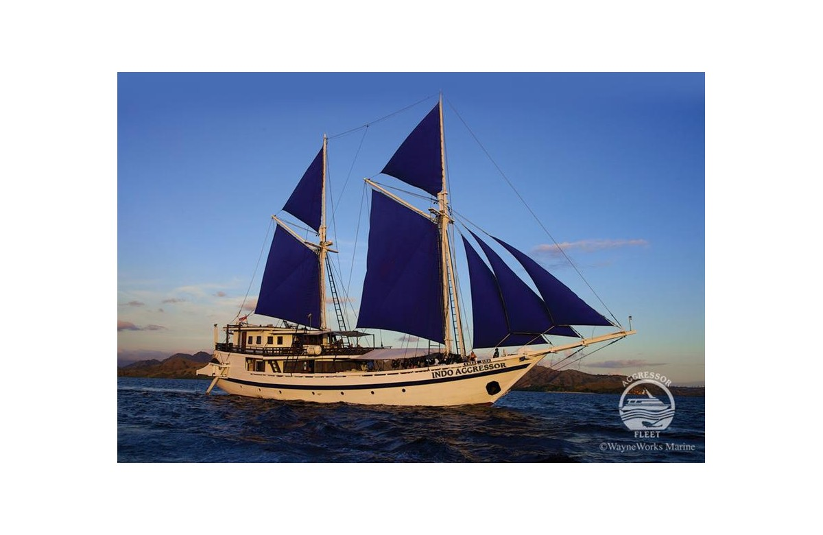 INDO AGGRESSOR I 7 NIGHTS I 500 EURO DISCOUNT I  JUL - DEC 2021  I KOMODO I INDONESIA