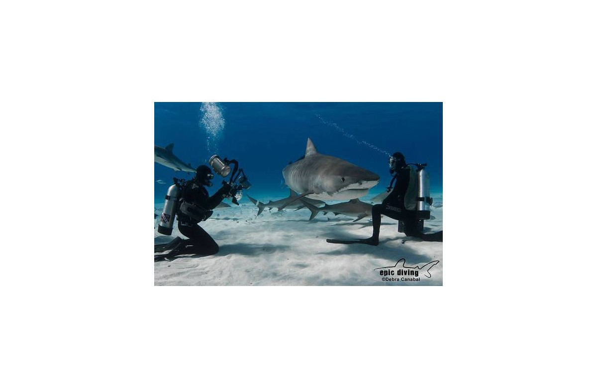 EPIC DIVING I DIVING WITH TIGER SHARK I GROUP OFFER I 6 NIGHTS + 5 DAYS DIVING I BAHAMAS